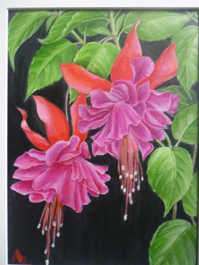 a4-pink-fuschia_r