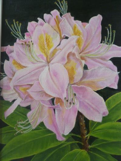 a4-pink-rhododendron-003_r