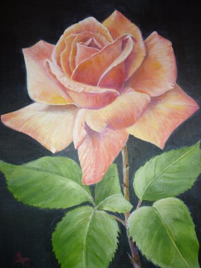 a4-rose-2013_r
