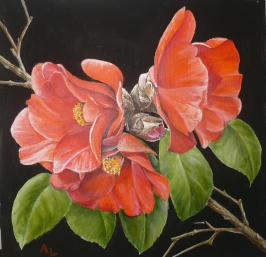 camellia-b_r-2_0