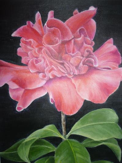 camellia_r