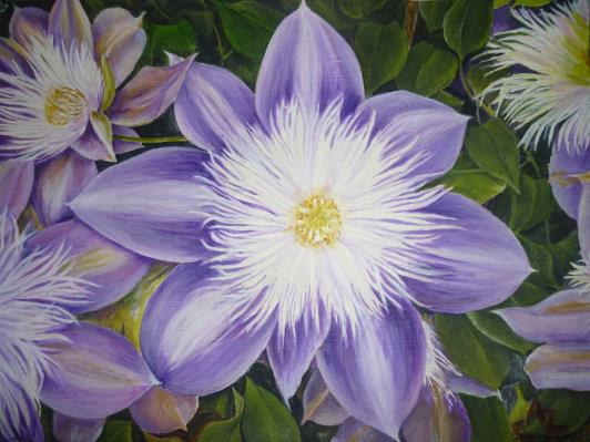 clematis_r