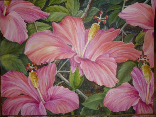 hibiscus-006_r