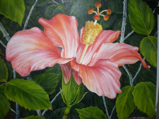hibiscus-2013_r
