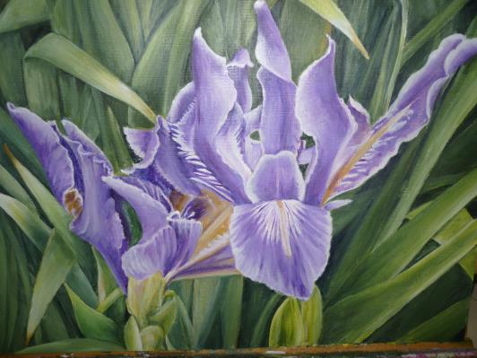 iris-may-2012-003_r