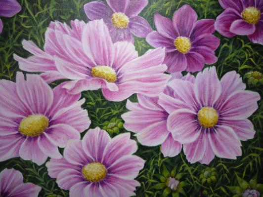 pink-daisies-005_r