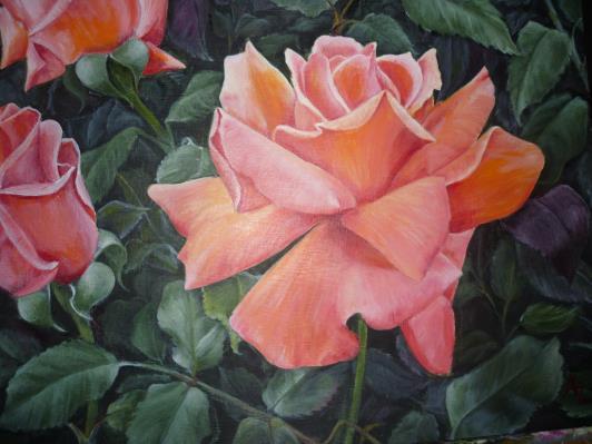 pink-rose-junw-2012-011_r