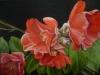 camellia-a_r