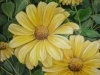 daisy-001_r