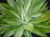 leaf-pattern-2013_r