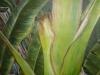 paintings-2011-004_r