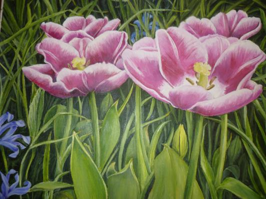 tulip_r