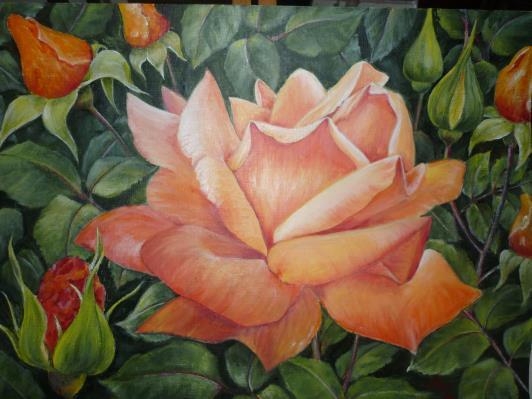 walpole-roses-002_r