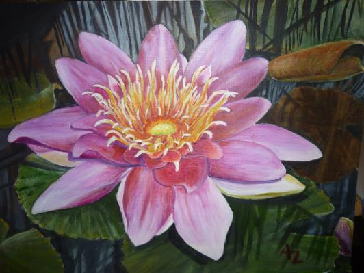 waterlily-002_r