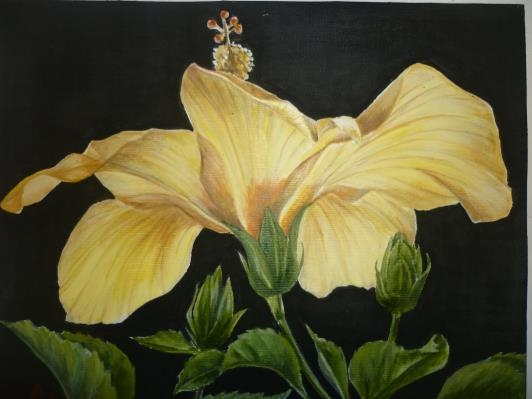 yellow-hibiscus_r