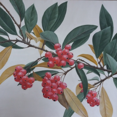 Cotoneaster 134_r