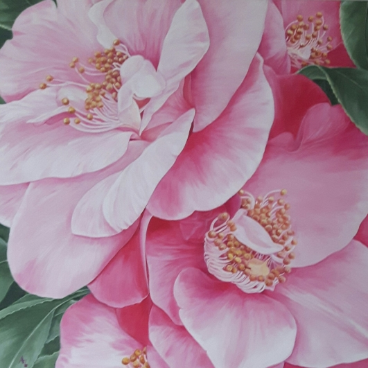 pink-camellia_r