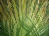 chusan-leaf_r