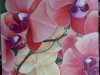 pink-yellow-orchids_r