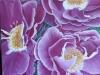 rhapsody-rose_r