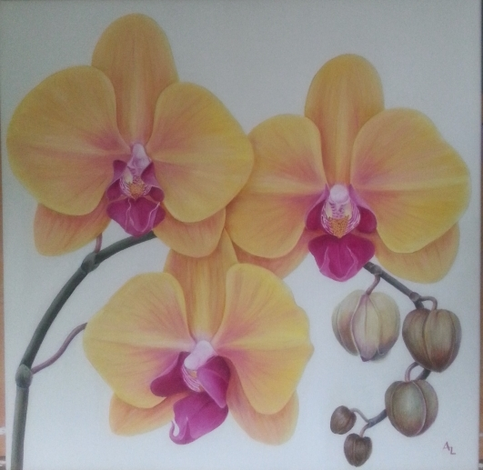 yellow-orchid-004-2_r